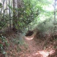 自然豊かな葉山町上山口から木古庭にて