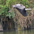 7月の探鳥会 探し観た鳥17種