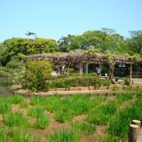三渓園の庭