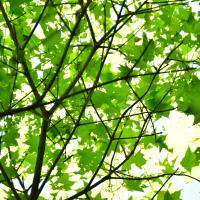 緑の中で一休み