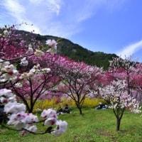 春のひととき、花の下でシートを敷いてお花見弁当