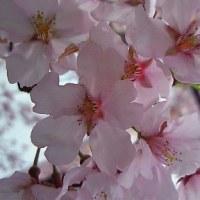 春の空は、、