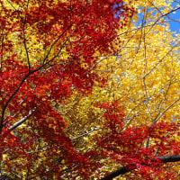 『季節の色』 黄葉・紅葉