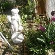 ジューンベリーの白い花と開き始めたチューリップの花!