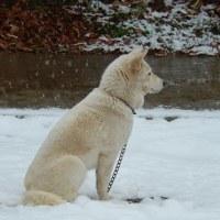 雪の中のユキ