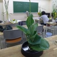 いけ花教室 (造形的に活ける)