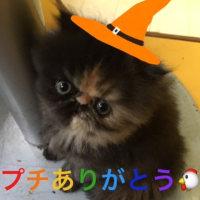 ペルシャ猫界のMR.ビーンだね!クリ坊☆いいんじゃない!!(´∀`=)ワォ