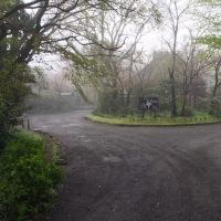 湯布院温泉 霧のなか金鱗湖へ