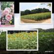 世羅高原農場「季節の花フォトコンテスト」ローズフェスタに応募! 2017.07.27
