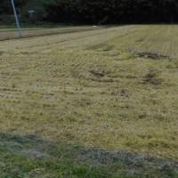 稲刈り二日目