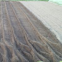「牛糞堆肥」だけで耕運
