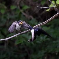 いろいろ野鳥