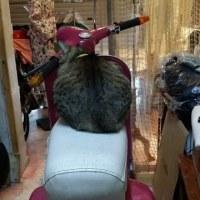 イタ車(ベスパ)と猫