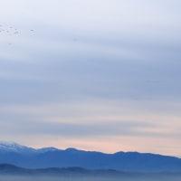 河北潟干拓地 野鳥の国