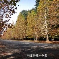プラタナス並木の紅葉