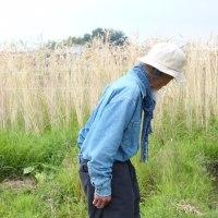 川口由一さん 自然農田畑  2017年6月