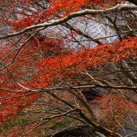 嵯峨野鳥居本の紅葉