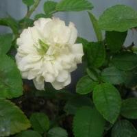 我が家の花達(9月P3)