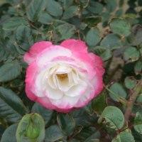 2009-10-25花の美術館02