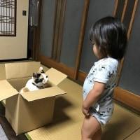 ☆ニャンズ☆ 猫とダンボール箱とみおりんと