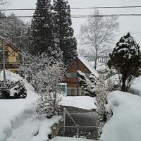 3月も終わろうとしているのにびっくりなんですけどこの雪!