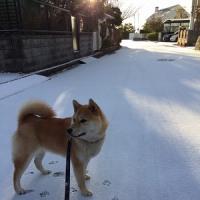 初雪体験!