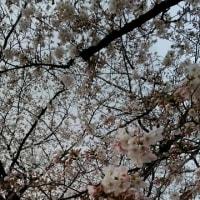 桜舞うなか♪