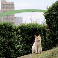 東京下町ねこ散歩Ⅸ 2016年9月 その11