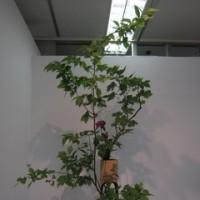いしかわ四季の花協会展を見てきました。(5/12)NO.2