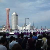 神戸よさこいまつりに来ています。