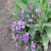 一個の空き缶が折角の花を傷つける