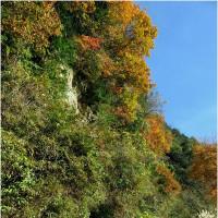 コバルート水越峠から金剛山登行。      16・12月3日
