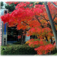 初冬の名残りの紅葉(^^♪カエデの由来は、葉がカエルの手に似ているから「カエルデ」