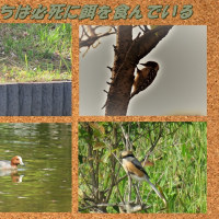 以楽園の鳥たち「鳥たちは必死に餌を食んでいる」
