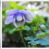 お花の写真・・・