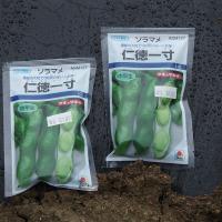 空豆の種蒔き。