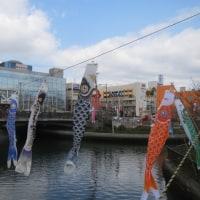 桜 鯉のぼり マフラー&コート