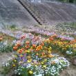 堤防に花畑