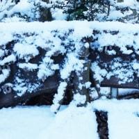 貴重な雪景色