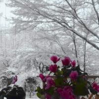 白い夕方の森に深々と雪降る。