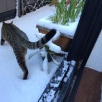 あいちゃん初雪