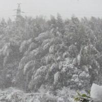 今日は大雪です。