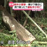 倒木が車直撃で32歳の男性死亡、熊本市が3年前から伐採要請