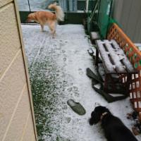 初雪ですとよ