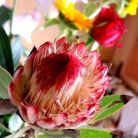 カウンターの花
