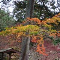 【気温7℃】極寒の紅葉ツーリング【霧雨強風】
