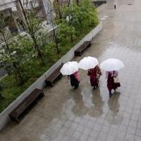 3月26日(日) 雨