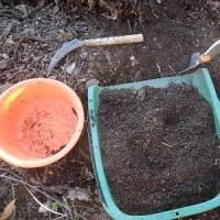 原賠法見直し 被害者の救済最優先で/超特大のカサブランカ球根を植えました。