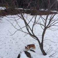 雪が積もってたドッグラン