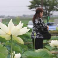 09'蓮園【写真】